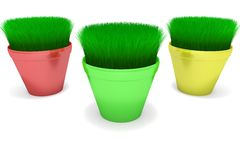 Pots with a growing grass Royalty Free Stock Photo