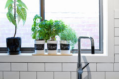 Pots of herbs on contemporary kitchen window sill Royalty Free Stock Photography