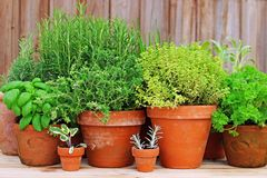 Pots of herbs in garden stock photo