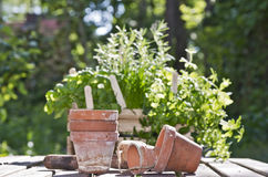 Pots and herbs Stock Photography