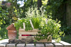 Pots and herbs Royalty Free Stock Images
