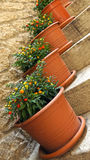 Pots with ornamental nightshade on the stairs Stock Image