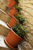 Pots with ornamental nightshade on the stairs Royalty Free Stock Image