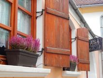 Pots with pink canullas on the sill. Of a medieval house in Sighisoara, Romania Royalty Free Stock Photography
