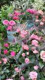 Pots with pink roses Royalty Free Stock Photo