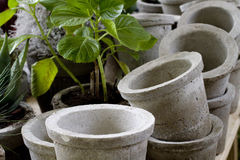 Pots and plants. Clay garden flower pots and plants Royalty Free Stock Photo