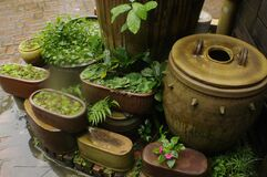 Pots and plants Stock Photos