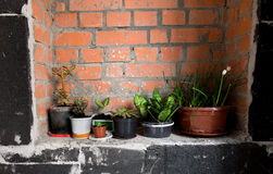Pots of plants near wall stock photos