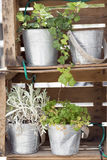 Pots of plants Royalty Free Stock Photography