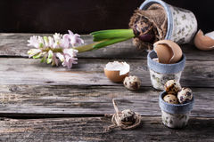 Pots with quail eggs and Hyacinthus flower Royalty Free Stock Photography
