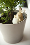 Pots and rabbit. Branch of thuja  on white background Royalty Free Stock Photo