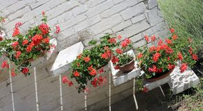 Pots of Red Geraniums in the staircase of the Mediterranean Hous Stock Photography