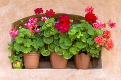 Pots with red geraniums on the window.  Stock Photo