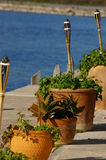 Pots by the sea. Terracotta plant pots resting on a waterside patio with bamboo torches Stock Photo