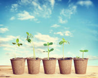 Pots with seedlings stand in a line against sky Royalty Free Stock Photography