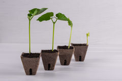 Pots with seedlings stand in a line stock images
