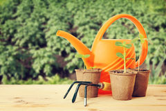 Pots with seedlings and watering can Royalty Free Stock Photos
