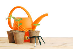 Pots with seedlings and watering can isolated over white Stock Image