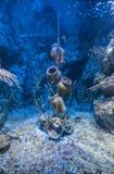 Pots sous la mer Images libres de droits