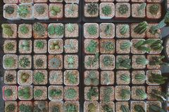 Pots in square shape, put many cactus plants in pots royalty free stock image