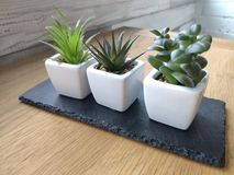 Pots with succulents on light wooden table against white brick wall background. Soft focus stock images