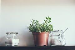 Pots sur l'étagère de cuisine Images libres de droits