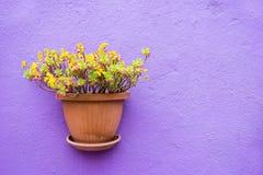 Pots un en céramique avec le plan rapproché de fleurs Photo libre de droits