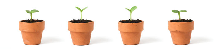 Pots on White. Four seedlings in pots on a white background Royalty Free Stock Image