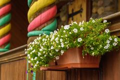 Pots with white flowers on the railing of a wooden house entry. stock photo