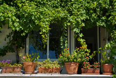 Pots in the window Royalty Free Stock Photo