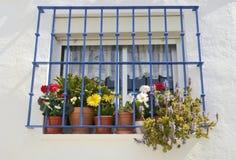 Pots in window Stock Image