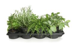 Pots With Fresh Aromatic Herbs On White Background Stock Photography