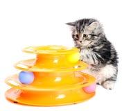 Pott med leksaken för katter Arkivbilder