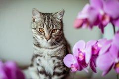 pott Randig grå katt Cat Head Stående baleenframsida arkivfoto