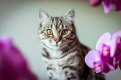 pott Randig grå katt Cat Head Stående baleenframsida royaltyfri fotografi
