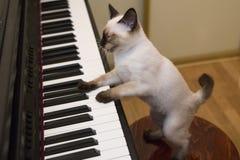 Pott sjunger sången, medan spela pianot Arkivbild