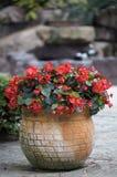 Potted цветки Стоковые Изображения RF