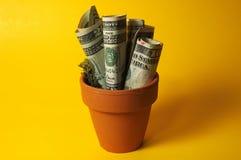 деньги potted Стоковая Фотография