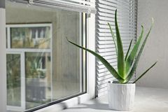 Potted aloe vera plant on windowsill in room. Space for text stock photography