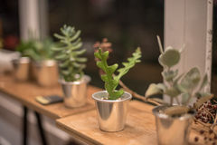 Potted Royalty Free Stock Photos