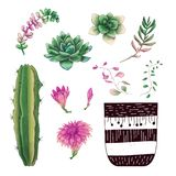 Potted cacti and succulents plants badge collection set. stock photos