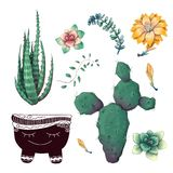 Potted cacti and succulents plants badge collection set. stock photo