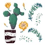 Potted cacti and succulents plants badge collection set. royalty free stock image
