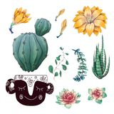 Potted cacti and succulents plants badge collection set. royalty free stock photos