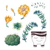 Potted cacti and succulents plants badge collection set. royalty free stock photo
