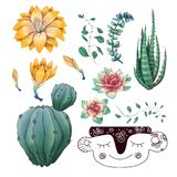 Potted cacti and succulents plants badge collection set. stock images