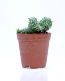 Potted cactus Stock Photos