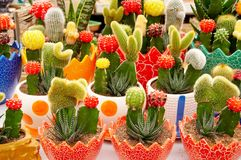 Potted cactus. Different kinds of little cactus potted displaying for sale Royalty Free Stock Images