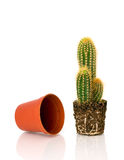 Potted cactus and an empty pot Royalty Free Stock Photos
