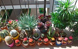 Potted cactus garden on a tri-level condo building walkway,. Image shows a potted cactus garden on a tri-level condo buuilding walkway in Laguna Woods retirement royalty free stock photo